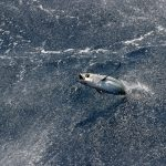 AZTI conocerá los efectos del cambio climático en cuatro pesquerías