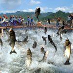 La acuicultura se hace más global y China redobla la  producción