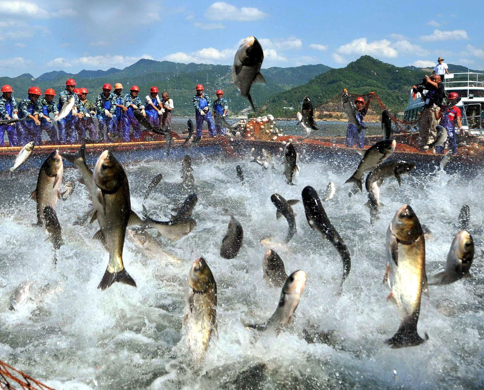 Resultado de imagen para producción mundial de pescado se industrializa