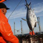 Empresas atuneras impulsar un plan de mejora de la pesca en el Atlántico oriental