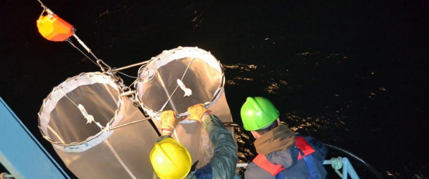 AZTI afronta una investigación sobre el reclutamiento de la merluza