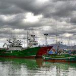 Cerca de 40.000 kilos de anchoa descargados en el primer día de campaña