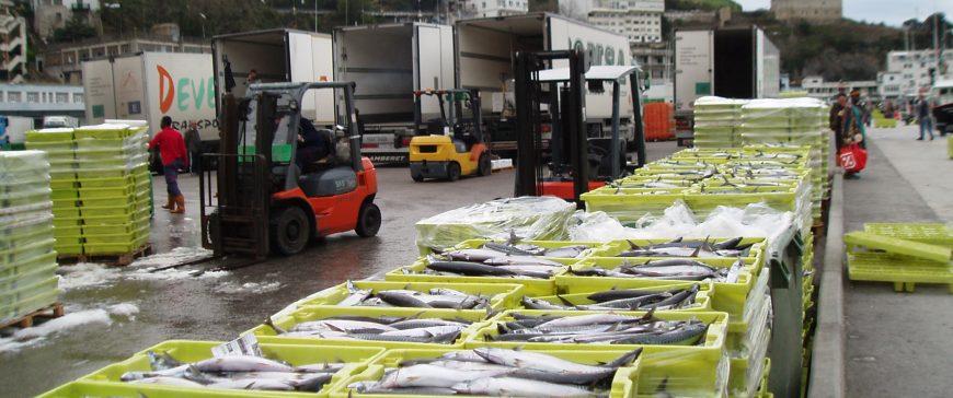 La FAO prevé una producción de 194 millones de toneladas de pescado en 2026