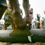 La flota palangrera pide igualdad de condiciones en la pesca de tiburón