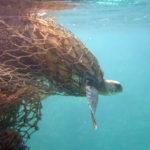 Arranca un proyecto europeo de protección marina de 50 millones de euros