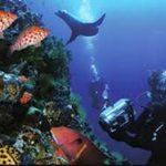 Reglamentado el uso del buceo en las reservas marinas