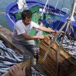 La flota de bajura preparada para el bonito, tras la  campaña de anchoa