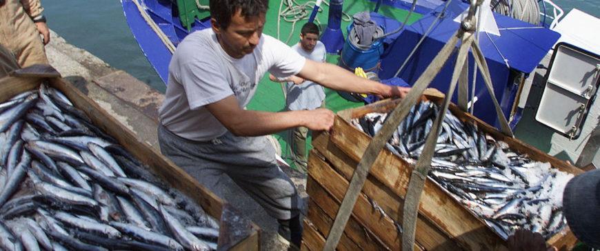 Los pescadores de bajura buscan tallas grandes para rentabilizar las faenas