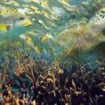 El Gobierno trata de conseguir la mayor superficie de mar protegida