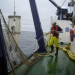 La biomasa de anchoa se encuentran en su máximo histórico