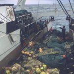 Abren expediente a armadores de dos buques por la pesca ilegal