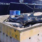 El mercado de conservas de atún experimentará un crecimiento muy leve