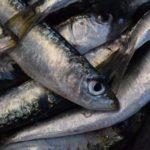 La sardina, al borde del colapso