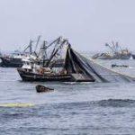 Las buenas  capturas de anchoveta en Perú mejoran los ingresos de la flota