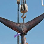 Los pescadores canarios demandan al Gobierno por el reparto de la cuota de atún rojo