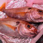 El calentamiento global podría reducir el tamaño de los peces