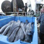 Las descargas de pesca fresca sube un 2,66 por ciento