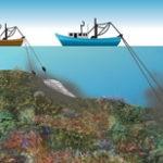 Pesca inicia la campaña para determinar el estado del fondo marino