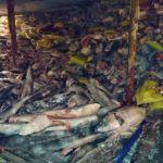 La flota china, la más acusada por pesca ilegal