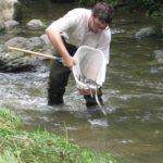 AZTI trabaja en la recuperación de la anguila europea
