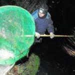 La pesca ilegal pone en peligro la pesca de angula