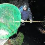 El Gobierno cántabro crea un censo para pescadores de angula