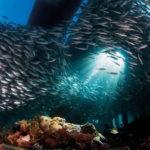 La acidificación, una gran amenaza para la vida marina