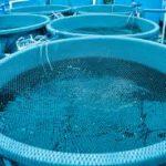 Europa se compromete a integrar el bienestar animal en la acuicultura
