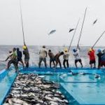 La Conferencia de Atún Azores llama a realizar su compra ética y la protección del arte