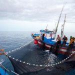 La pesca de xarda muy limitada este año por la escasa cuota