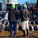 Japón lanza una plan de protección del atún blanco
