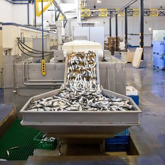 Los armadores atuneros defienden la congelación del  atún en salmuera