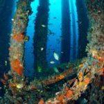 La empresa BASF es la que más patentes tiene sobre la biotecnología marina