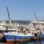 La flota china duplica las capturas de pulpo en Mauritania y Marruecos
