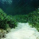 Ecologistas recurren el decreto de protección balear de Posidonia