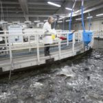 Suiza se lanza a la producción de salmón en tierra