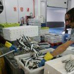 La flota vasca descarga 60.000 kilos de sardina al no localizar caballa