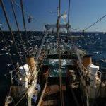 El proyecto Propesca avanza en el eviscerado de gallo por barcos de Gran Sol