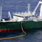 Las capturas incidentales de mamíferos de los atuneros es mínima