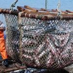 La captura de especies ha pasado en 60 años de 28 millones de toneladas a 112 millones