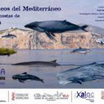 Un corredor se crea para el paso de cetáceos por el Mediterráneo