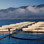 Unas 700 especies se utilizan en la acuicultura a nivel global