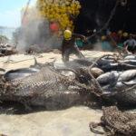 Cinco barcos han sido acusados de ejercer pesca ilegal según expone IOTC