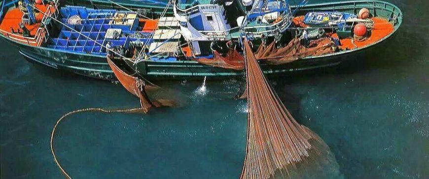 """La OCU difunde las """"muchas bondades"""" del pescado azul"""
