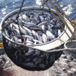 La cuota de rabil del Indico repartida por barco según  capacidad y media de capturas