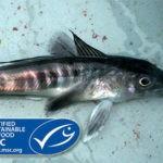 ¿Cómo hacer posible la sostenibilidad de las pesquerías con una inversión rentable?