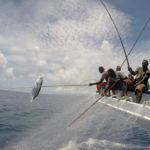 Un mapa muestra los viajes de atunes, tiburones y barcos en el mar