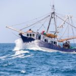 El Parlamento Europeo tratará en enero prohibir la pesca eléctrica