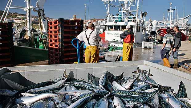 La pesca de verdel comenzará a finales de febrero