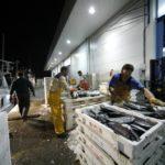 La lonja de Vigo licita el servicio de transformación de especies que cuesta 3,5 millones de euros